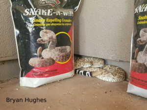 western diamond back rattler next to bag of snake repellent