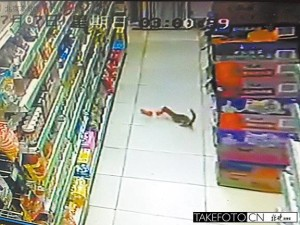 Siberian weasel stealing sausage from a Beijing supermarket.