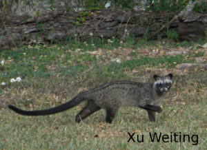 Xu Weiting_civet in day